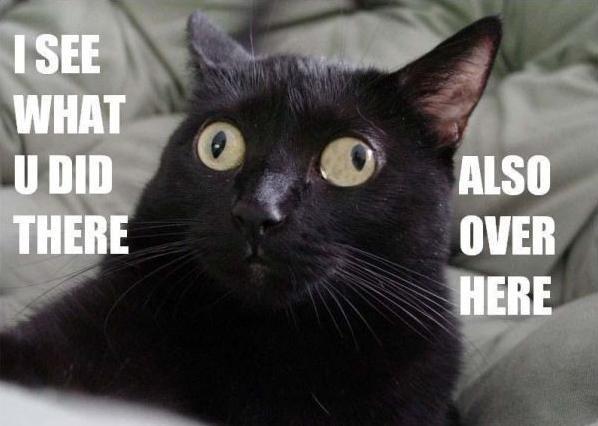 Cross Eyed Kitteh. lol.. DERP! lol kitteh cross eyed