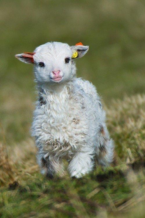 Cutest little fucker. .