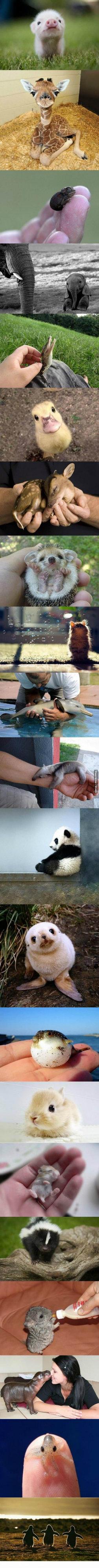 D'awwwwww. Cute animal babies .. far cuter than human babies