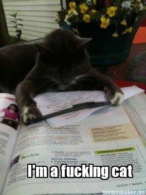 Da cats, are liek Backz. Lulz.
