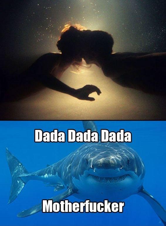 dada dada my shark buddy. .. it looks like they are in a womb. Shark sea underwater dada