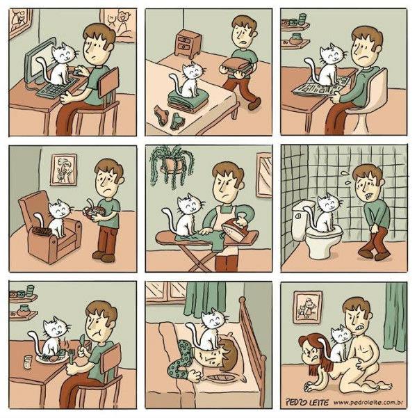 Damn cat. not mine, just sharing..