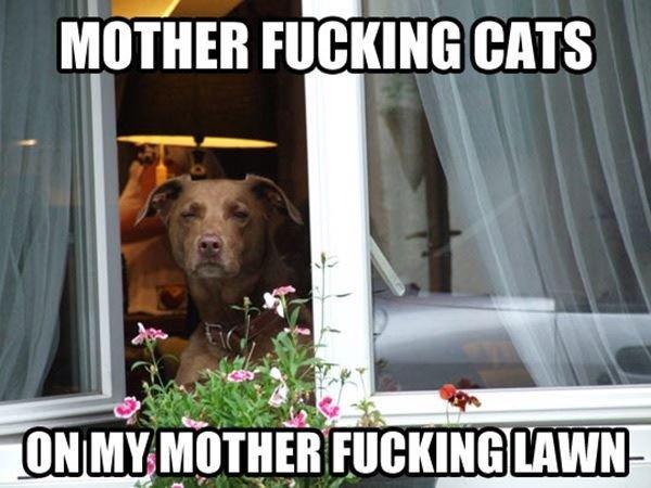 Damn Cats. . Mama nil' ii' iain can idiiot MY ' .
