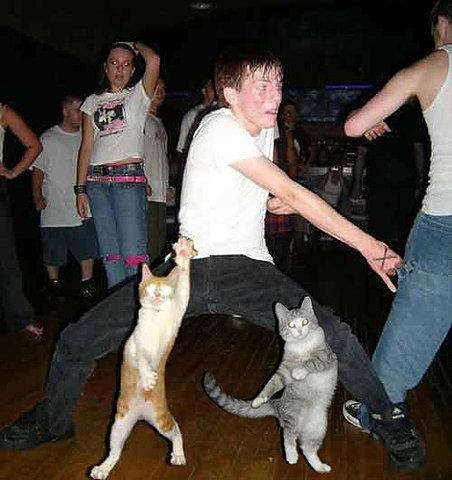 Dance Dance. .. CAT, IMMA KITTY CAT. AND A DANCE DANCE DANCE AND I DANCE DANCE DANCE