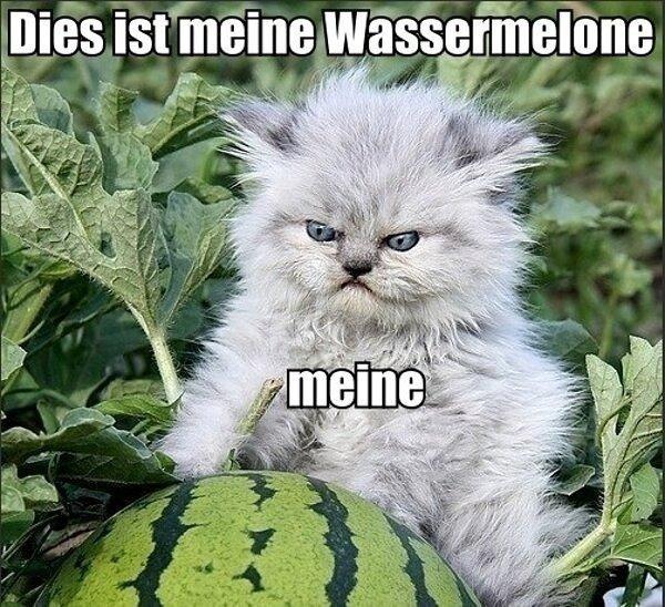 Das kitty. cats.. Heil Mein Kitler