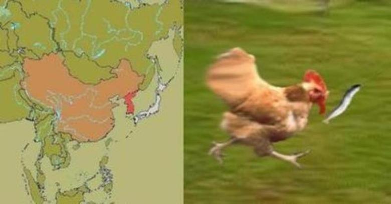 Dat chicken. .