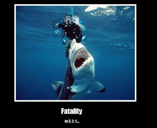 Dat Death. . Shark fatality