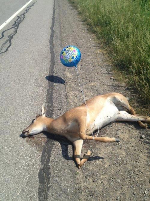 Deer God. Bambi is kill. RIP