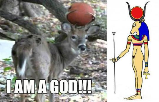 Deer god. .. i am your deer God now!