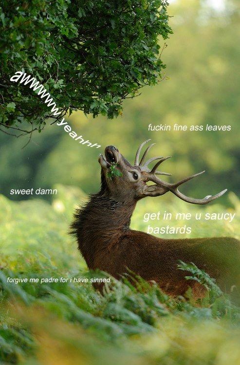 Deer. . sweet dam ' Deer saucy aww yeah sweet damn