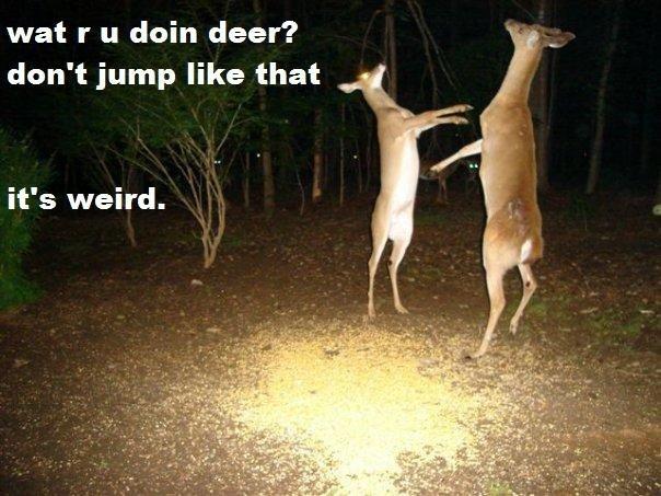 Deer. Stop That. wat r u doin deer? ', don' t jump like that it' s weird.
