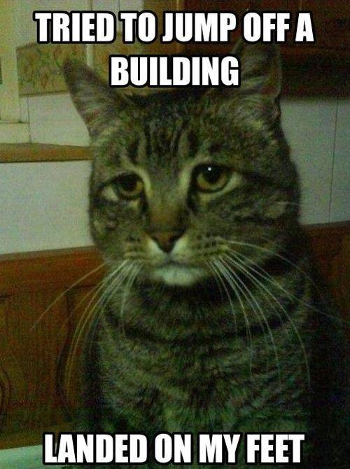 Deppresed Cat. . TIMI] TO JUMP MP ll ON MY FEET