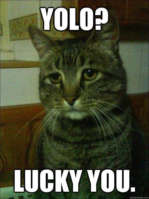 Depressed cat. .
