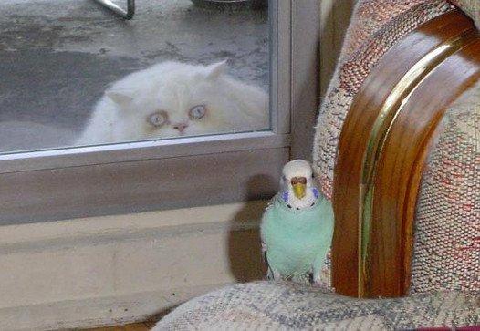 Determined Cat. .. brainssss brainssss BRAINNSSSS captcha : there..... ok....