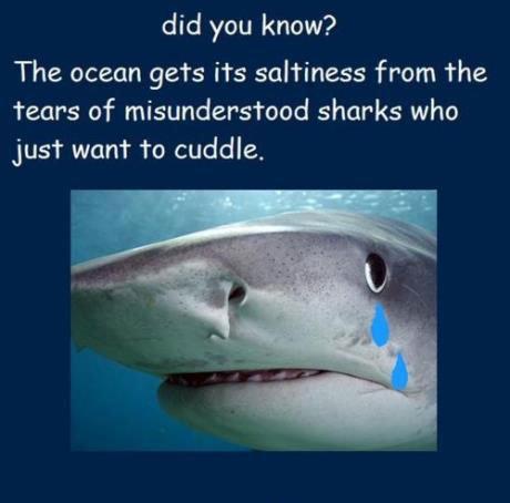 Did you know?. . did you know? The ocean gets its saltiness from the tears of misunderstood sharks who just want to cuddle.. Und der Haifisch der hat Tränen Und die laufen vom Gesicht Doch der Haifisch lebt im Wasser so die Tränen sieht man nicht