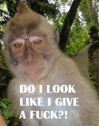 DILLIGAF Monkey. OC!. lillie)), I, LOOK dilligaf do i look like give a fuck monkey funny
