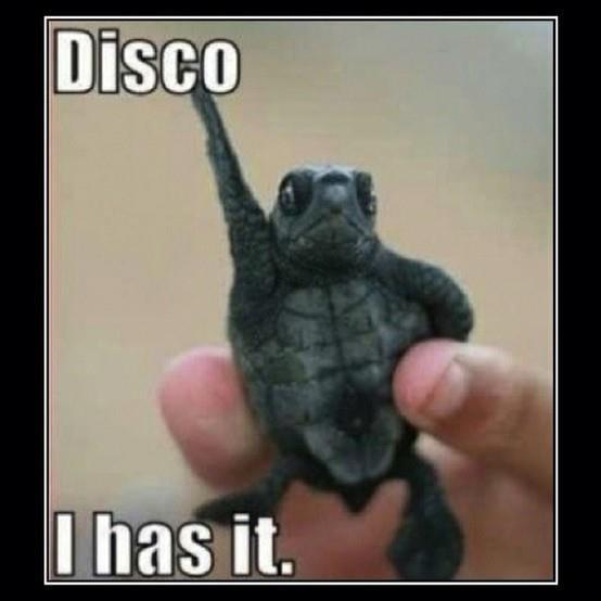 Disco. I has it.