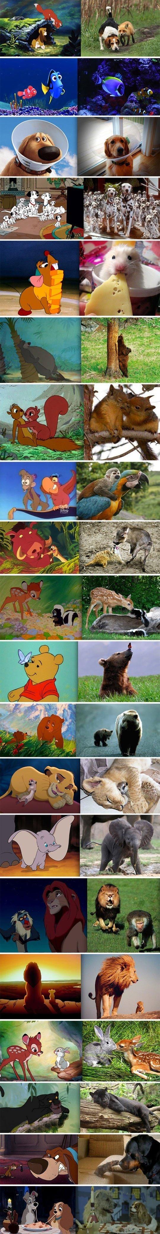 Disney animals in real life. .. why is Simba chasing Rafiki???