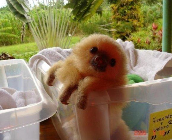 Do you guys like sloths?. cuz i love sloths.. sloth dump?