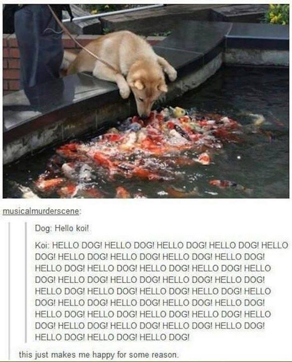 Dog+and+fish_2e722a_5433445.jpg
