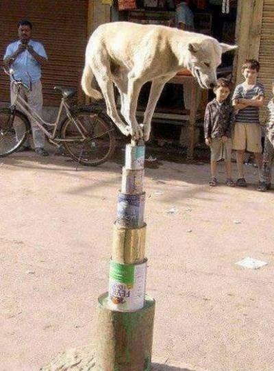 Dog. Balancing.
