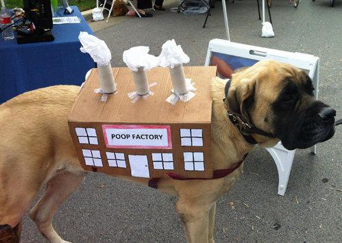 Dog Costume. .
