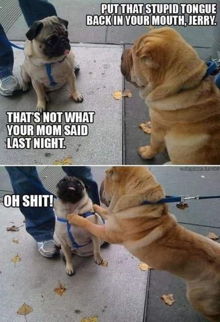 dog fight. .