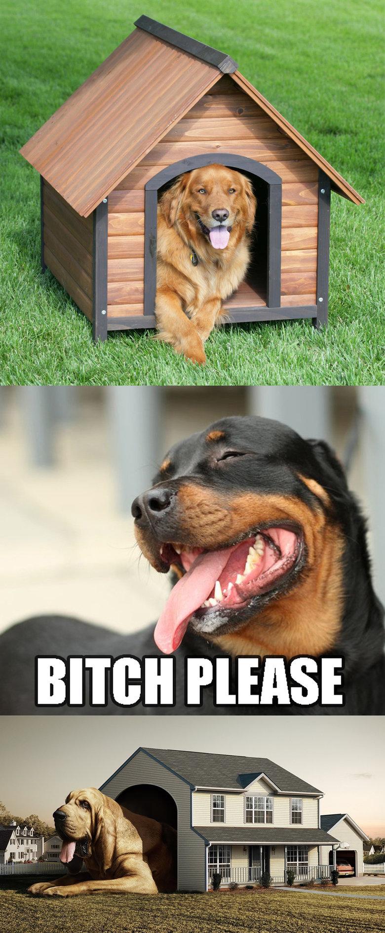 dog please. dog please!! credz buller. Dog pleease bitch please Noob