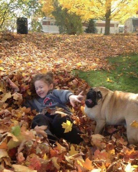 Dog, r u ok?. ermahgerd.. his neck disappeared