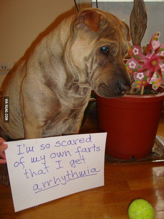 Dog Shaming. Not mine, found on 9gag (duh).. arrhythwia... what the ?
