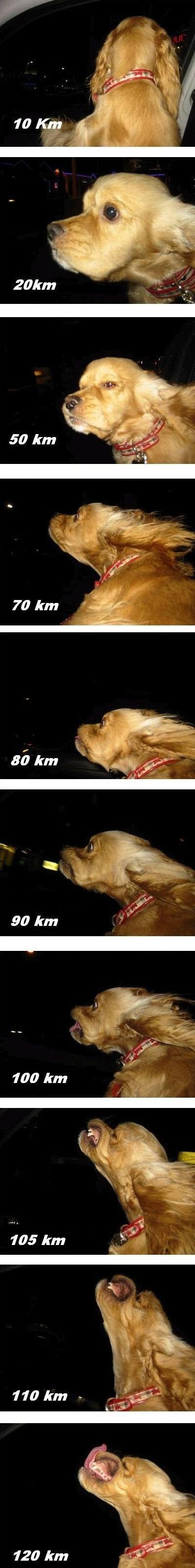 Dog Vs. Speed. .