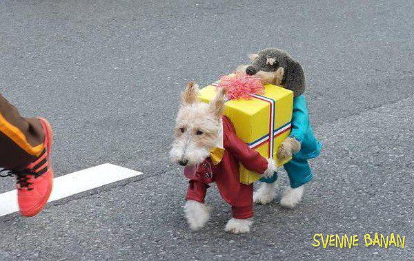 dog world. . Dog Costume