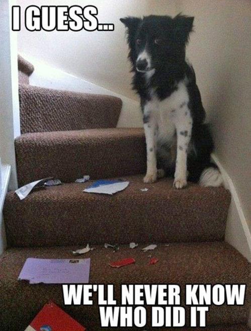 Dog. . WE' ll NEVER HEW