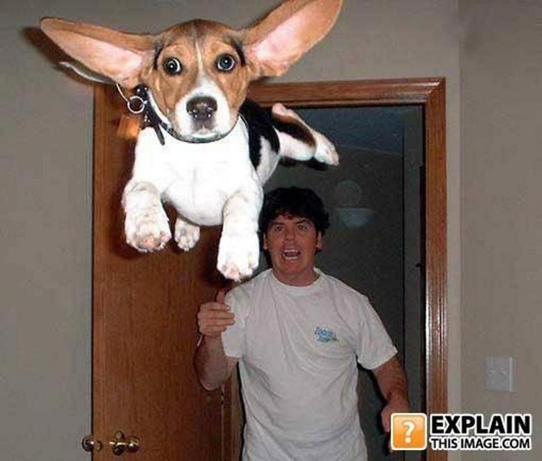 Dog, I Choose You. Gotta catch'em all!!!.. Dog uses float....Its super effective! Earth uses gravity...Its not very effective.... Dog i choose You