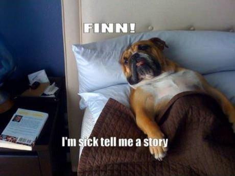 Doggy Dog Dog Doggy Dog. doog dog dog dog . Cat.