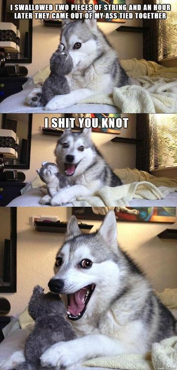 Dogs Get Puns. =). tta