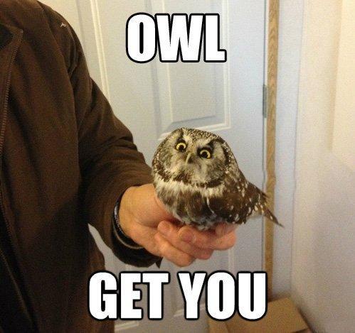 Don't piss off an owl.. .