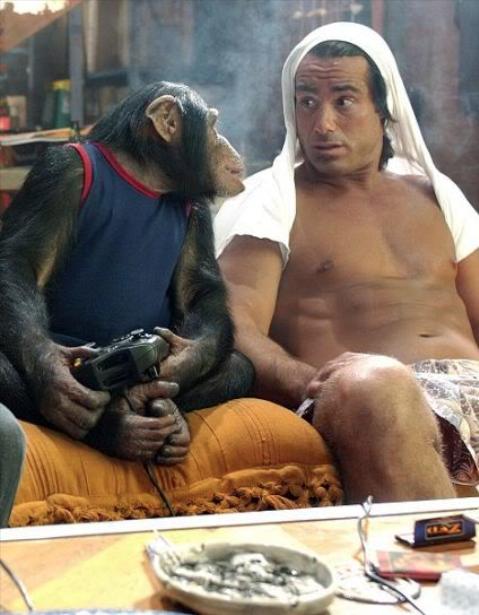 dont judge me monkey. .
