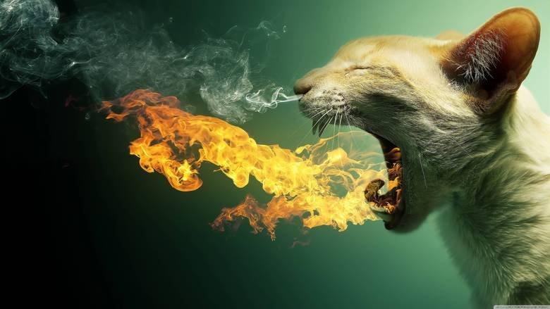 dragoncat. . MANEDEN_ a_ %