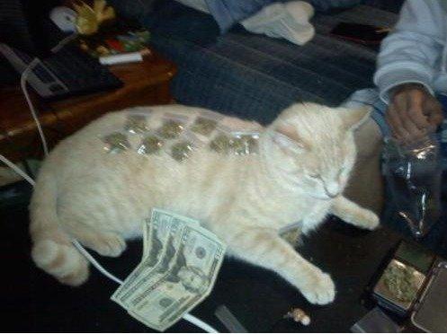 Drug dealer cat. Cat!.