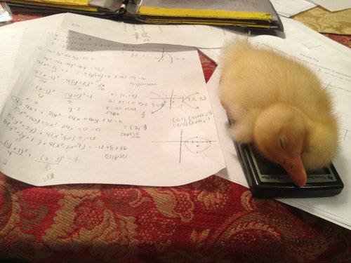 Help i can't do my homework Online essay writing help!