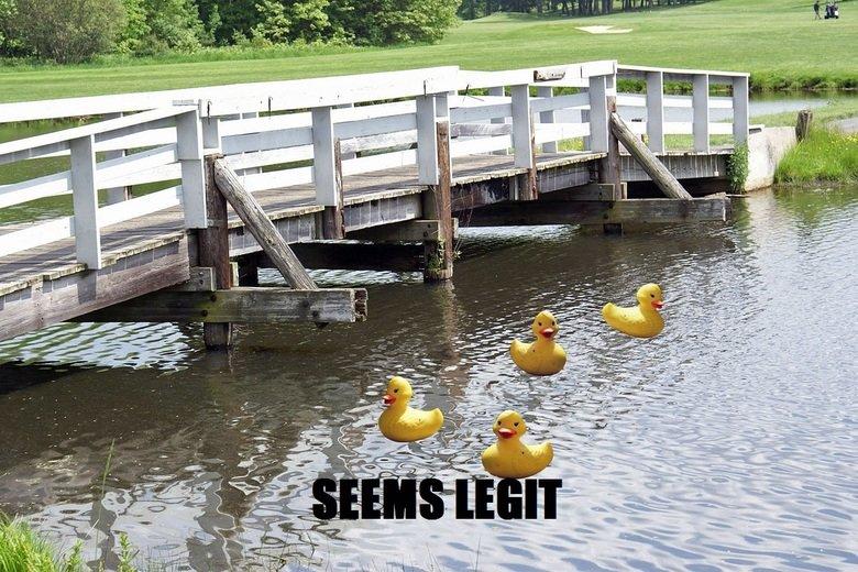 Ducks!. Ducks ducks ducks ducks. water ducks Photoshop Paint fail