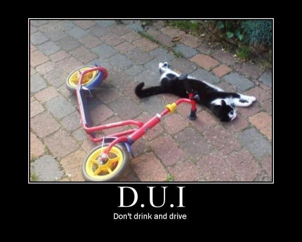 DUI. . cat bike drunk