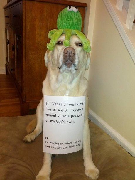 Dumb Vet. Awesome.. said I ' MII TU Sen: 3. l i turned I , I Mali W iih A Merill. Wanna bet? Dog poop Vet