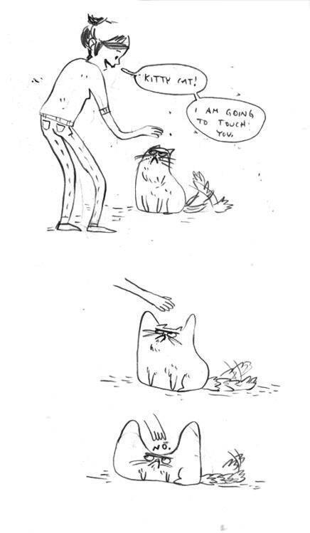 El gato es no bueno. .