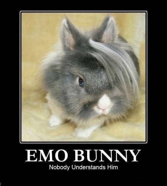 emo bunny. . Nobody Understands Him. nobunny