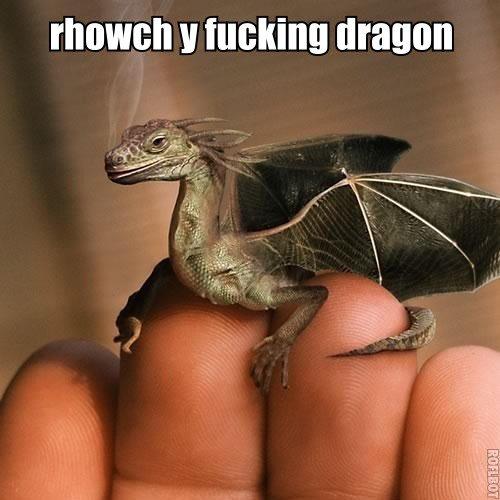 enter the fucking dragon. enter the dragon. Hacking dragon. dragon i cool!