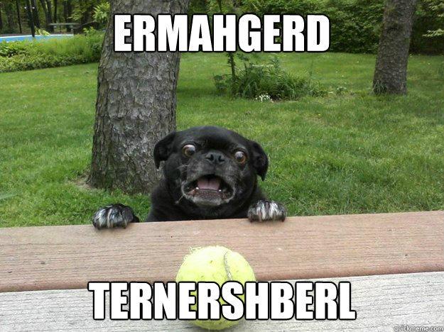 Ermahgerd Dog ERMAHGERD  you will say the