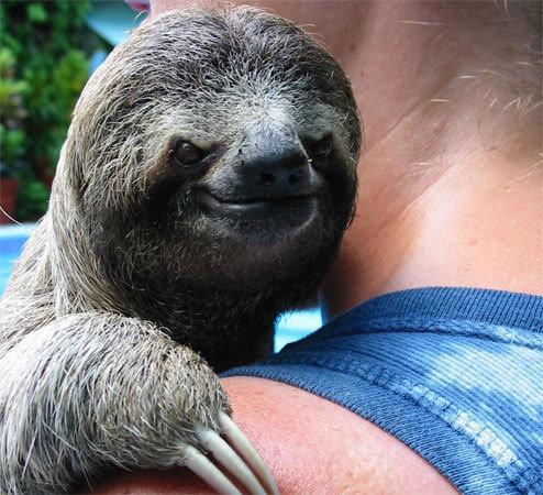 Evil Sloth Gif Evil Sloth