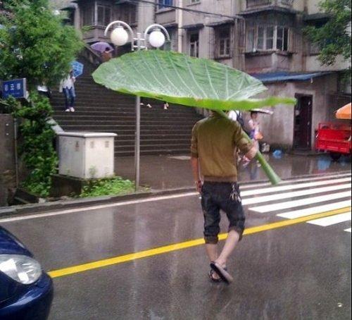 FUCK umbrellas. .. made me think of bug's life